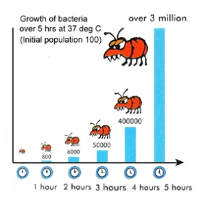 Bacteria growth in food 2